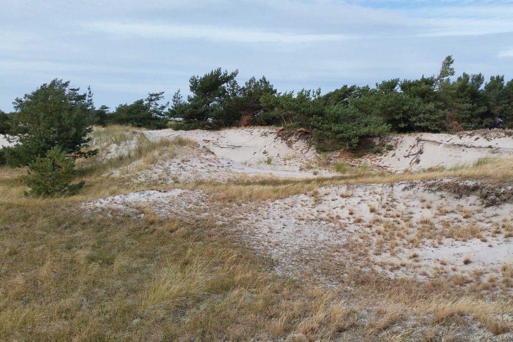 Naturschutzgebiet Darsser Ort