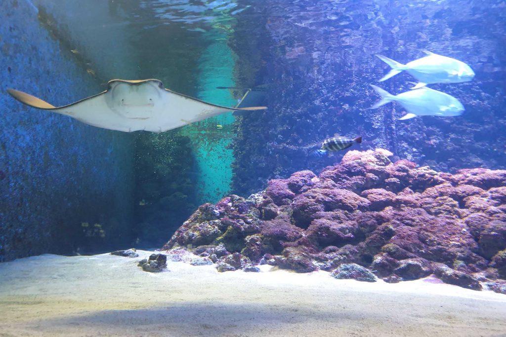 Meereswelten Fehmarn