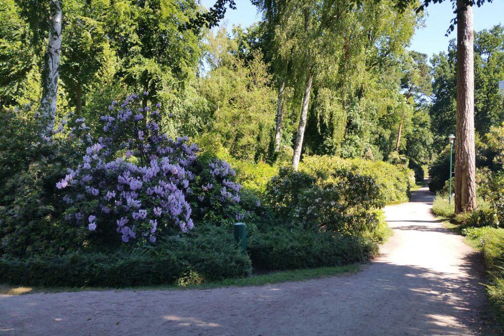 Rhododendronpark Graal Müritz