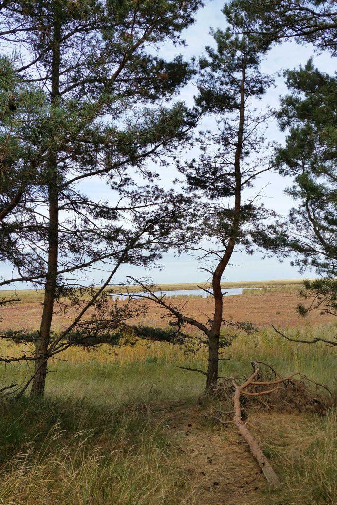 Landschaft auf dem Darß