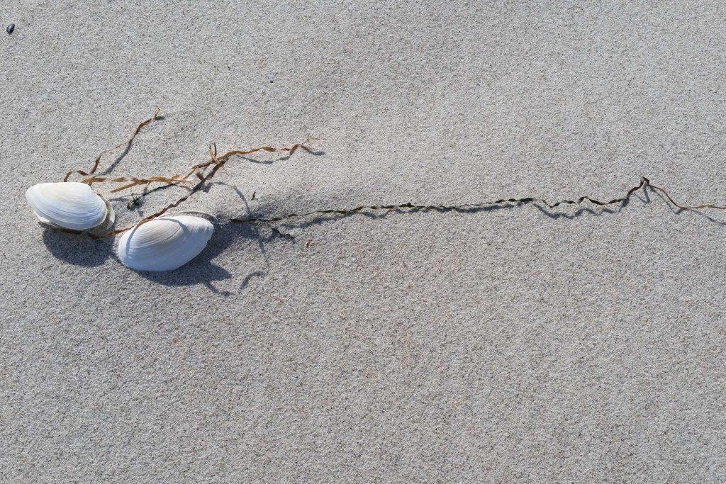 Strandimpression mit Muschel