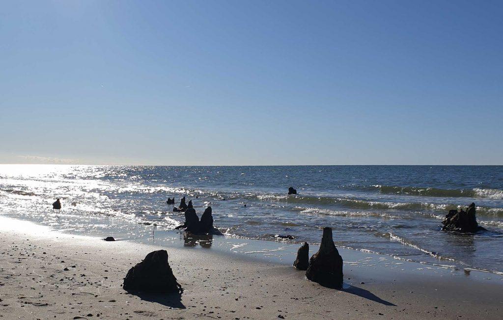 Baumstümpfe im Meer am Darsser Weststrand